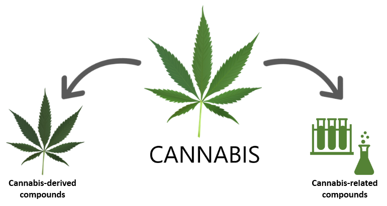 What are the active compounds in marijuana