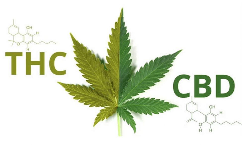 What is the difference between TCH and CBD